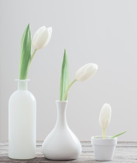 Tulpen op een witte achtergrond