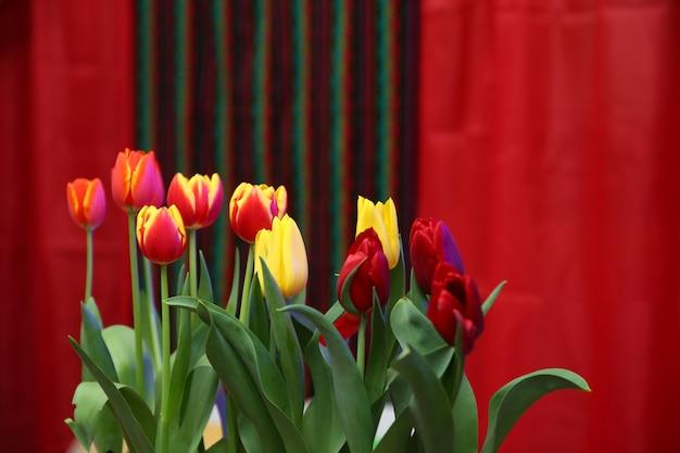 Tulpen op rode muur