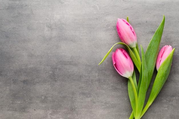Tulpen roze, op de grijze achtergrond.