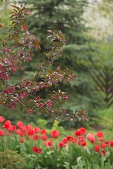 Tulpenbloemen op een onscherpe achtergrond van aard. lente achtergrond