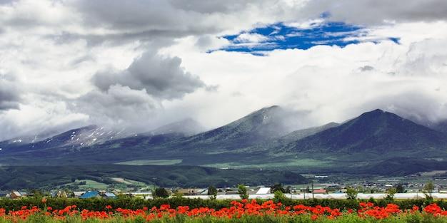 Tulpengebied onder wolkenhemel met bergachtergrond, furano, hokkaido