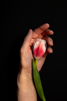 Tulpenknop op de palm van een man
