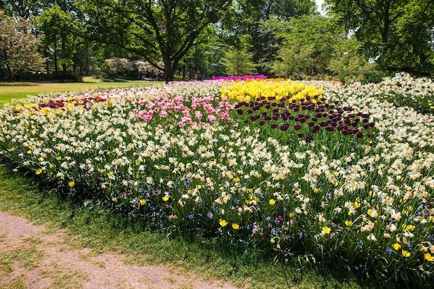Tulpenveld in keukenhof gardens, lisse, nederland