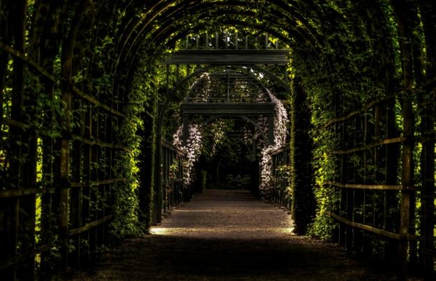 Tunel van wijnstokken