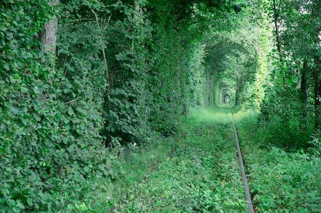 Tunnel van de liefde