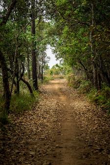 Tunnelweg op mysticus bosaardachtergrond