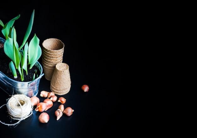 Turfpotten, ruwe draad, spruitjes in pot en tulpenbollen. kopieer ruimte