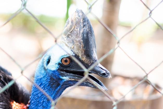 Turkije lopend en schreeuwend om voedsel in de dierentuin