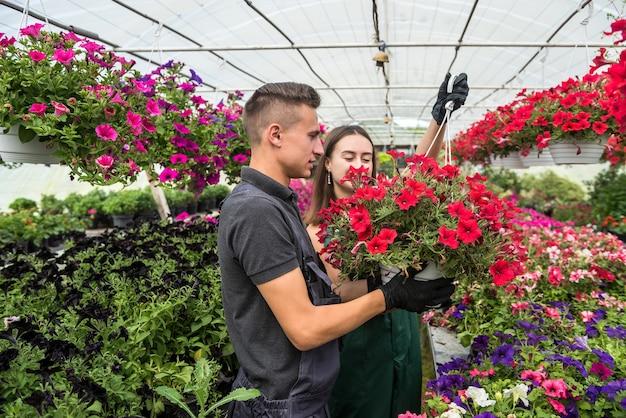 Twee aantrekkelijke jonge tuinders werken samen aan het kweken van bloemplanten te koop in een kas