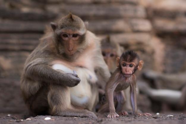 Twee apen kijken met argwaan