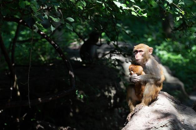 Twee apen moeder en baby in natuurlijke habitat