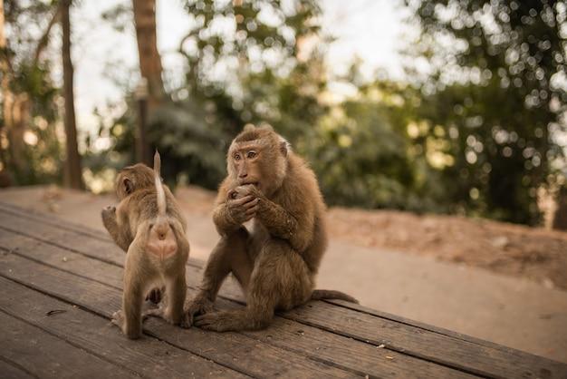 Twee apen op een houten oude armoedige donkere achtergrond. gezinsleven en gedrag van apen in het wild.