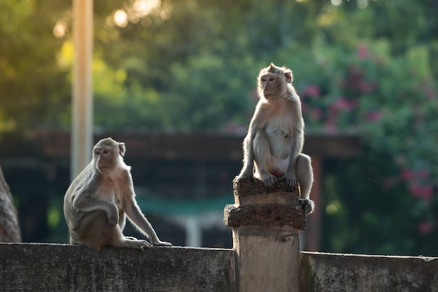 Twee apen waren vastbesloten in dezelfde richting te kijken