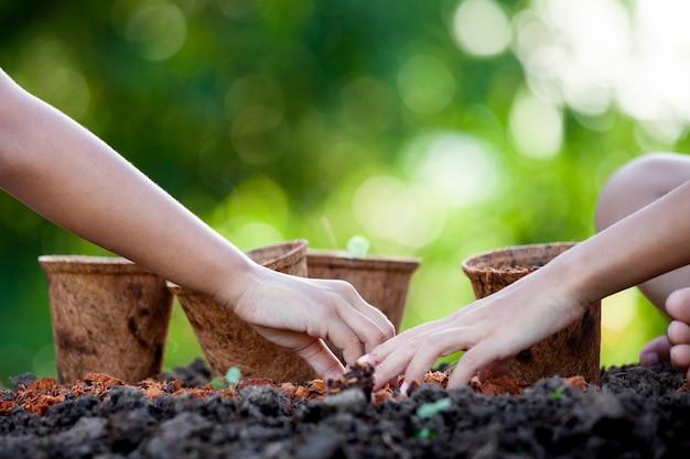 Twee aziatische kindmeisjes die jonge zaailingen in kringloopvezelpotten samen in de tuin planten