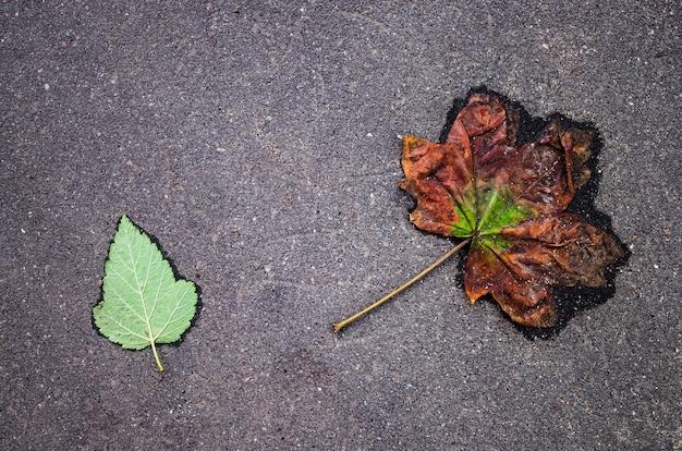 Twee bladeren op een asfaltweg. een verse groene en een kleine