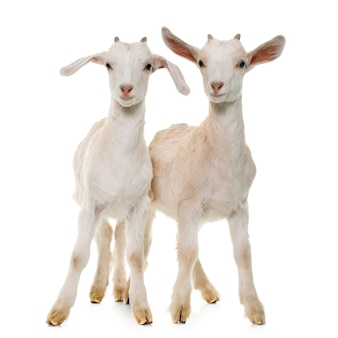 Twee blanke kinderen