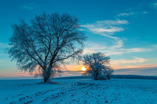 Twee bomen in een winter veld. frosty dawn.