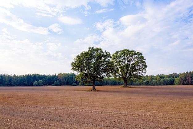 Twee bomen midden op een gecultiveerd landbouwgebied aan de rand van een bos