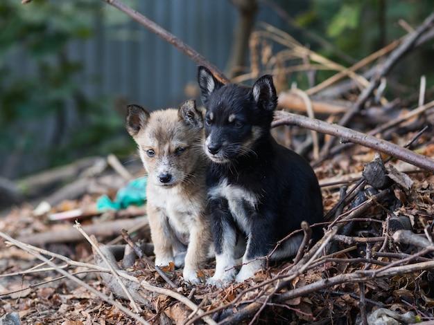 Twee dakloze, vuile puppies zijn op straat achtergelaten
