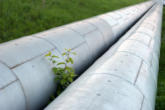 Twee dikke pijpen in beschermende metalen omhulsel met heet water en groene tak die tussen de pijpen ontspruit