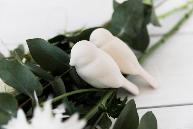 Twee dwergpapegaaien op bladeren tegen witte achtergrond