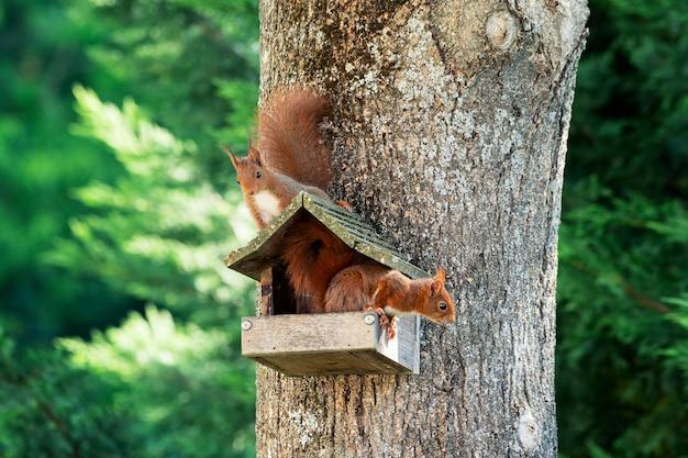 Twee eekhoorns op een boom in de tuin