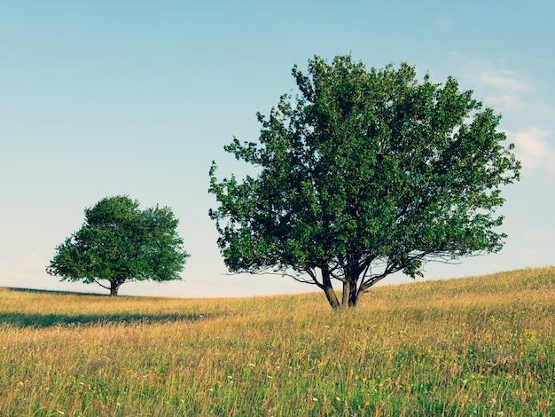 Twee eenzame bomen op een bloeiende gouden weide tegen de blauwe hemel eenvoudig landschap met prachtige bomen