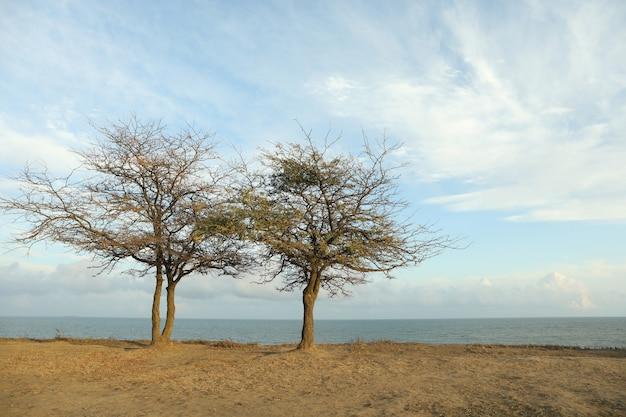 Twee eenzame bomen op helling tegen zee