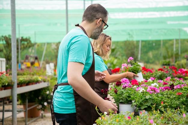 Twee gefocuste bloemisten die voor bloeiende planten in de kas zorgen en schorten dragen