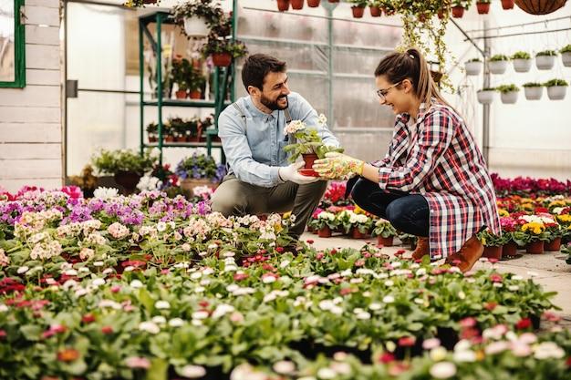 Twee glimlachende kwekerijmedewerkers hurken en praten. de man geeft vrouwenpot met mooie bloemen.