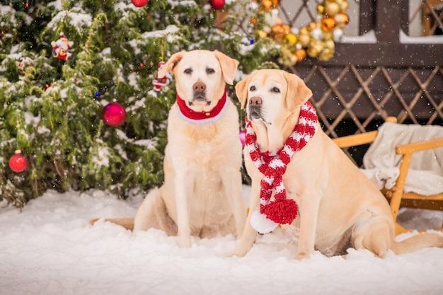 Twee gouden labradors in sjaals zitten in de buurt van een versierde kerstboom tijdens een sneeuwval in de winter op de binnenplaats van een flatgebouw.