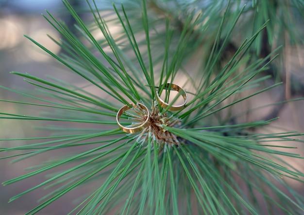 Twee gouden trouwringen liggen op de groene naalden van een pijnboom