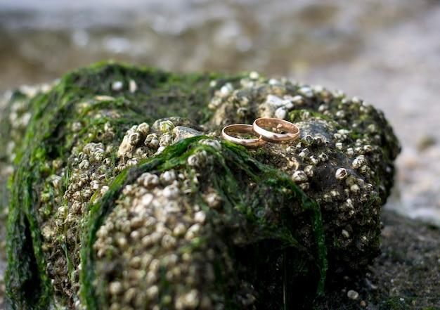 Twee gouden trouwringen liggen op een steen met algen