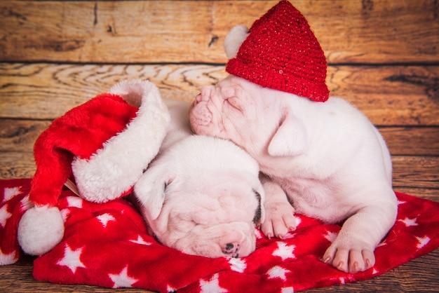 Twee grappige amerikaanse bulldog puppies honden kerstmuts