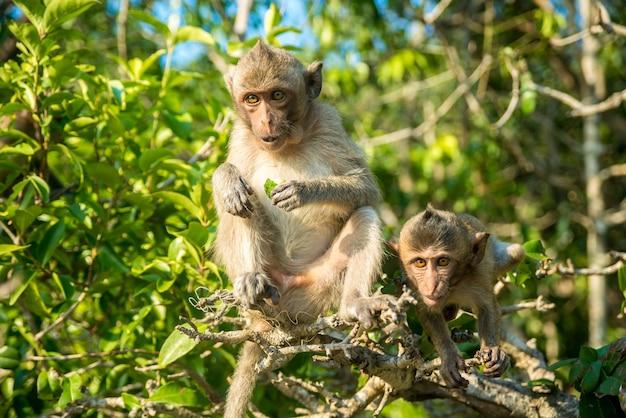 Twee grappige kleine aapjes