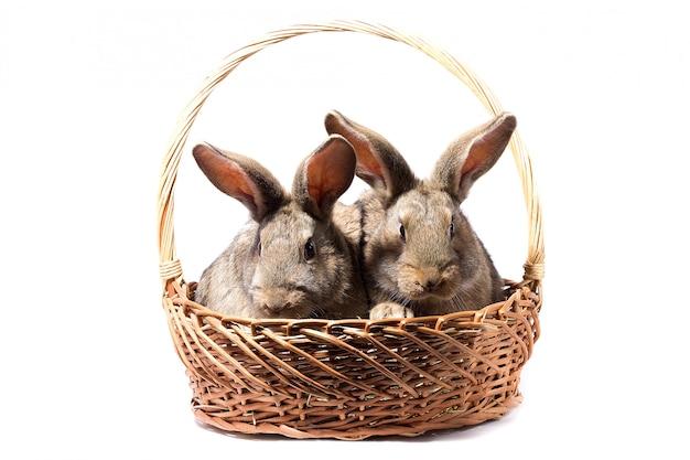 Twee grijze pluizige konijntjes in een mand, isoleren, paashaas in een mand