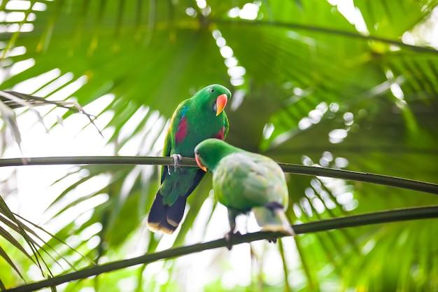 Twee groene papegaaien die met voedsel spelen