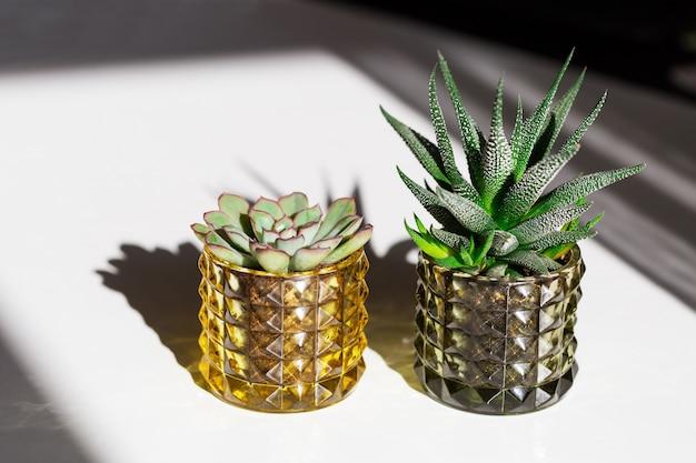 Twee groene vetplanten in glazen potten