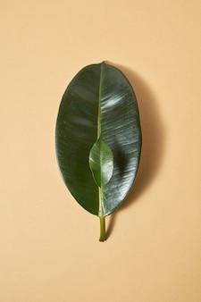Twee grote en kleine bladeren van groenblijvende tropische planten op een pastelbeige achtergrond met zachte schaduwen, kopieerruimte. ecologie en milieubehoud concept.
