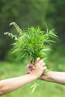 Twee handen die cannabis bevatten