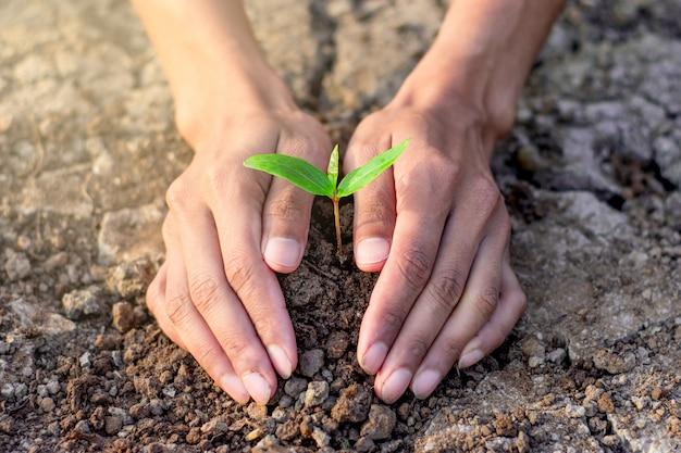 Twee handen van mannen die zaailingen in de grond planten.