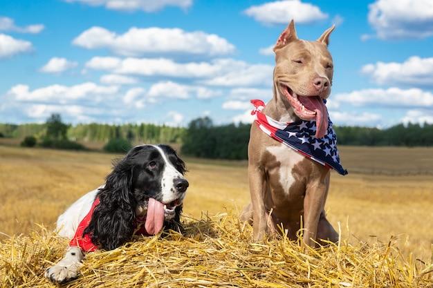 Twee honden bij een hooiberg