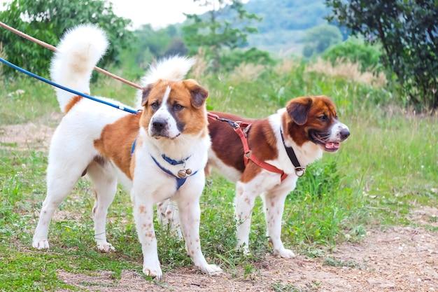 Twee honden die en zich op groen gras in de tuin samen kijken bevinden.