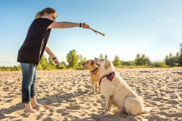 Twee honden labrador hoofd buiten in de natuur voert een commando uit om te zitten