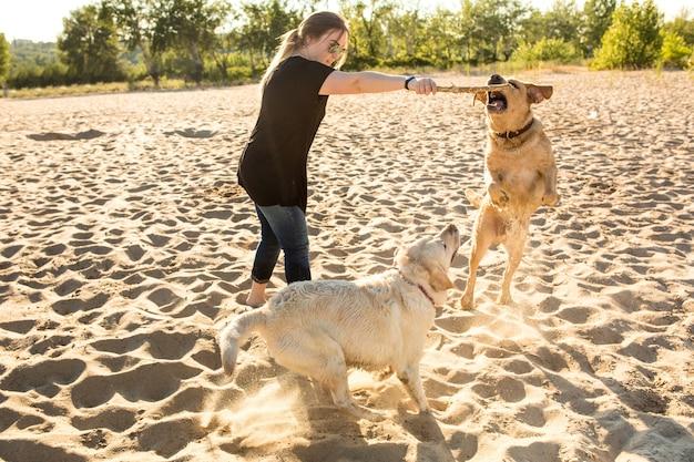 Twee honden labrador hoofd buiten in de natuur voert een commando uit