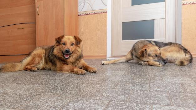 Twee honden liggen in een kamer op de grond