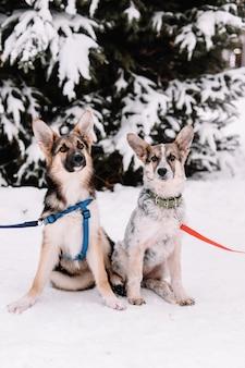 Twee honden zitten op de sneeuwstraat