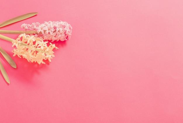 Twee hyacinten op roze achtergrond