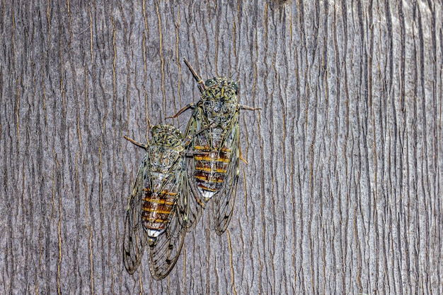 Twee insecten met doorzichtige vleugels