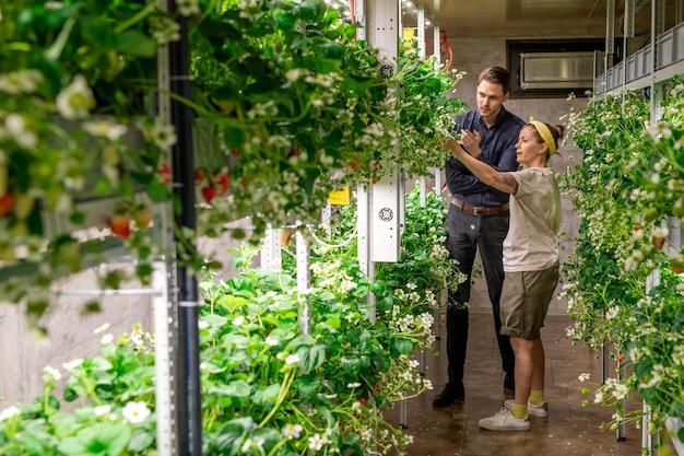 Twee jonge hedendaagse agro-ingenieurs bespreken de kenmerken van een nieuw soort aardbei terwijl ze in het gangpad in een verticale boerderij staan